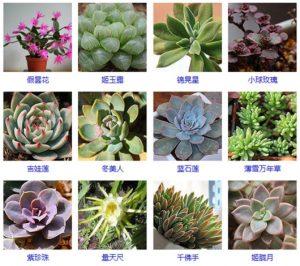 量天尺的扦插方法_量天尺怎么养?量天尺的栽培技术与繁殖方式-自然花卉